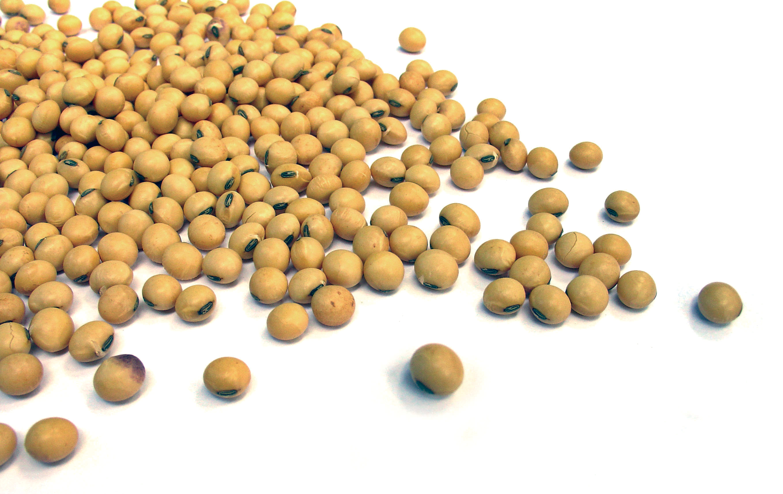 soia_aliments rics en proteïnas vegetals