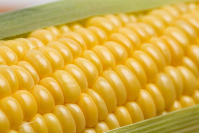 els riscos dels aliments transgènics