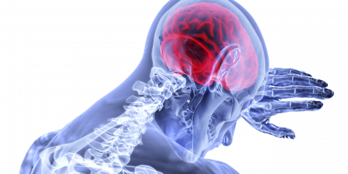 brain-3168269_12805